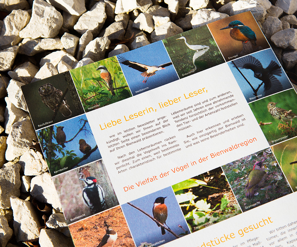 Sabath Media Werbeagentur - Naturschutz Bienwald – Magazin - Referenzbild 2