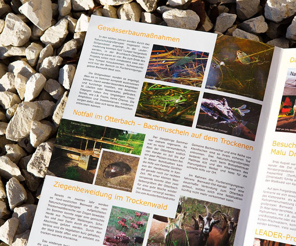 Sabath Media Werbeagentur - Naturschutz Bienwald – Magazin - Referenzbild 3